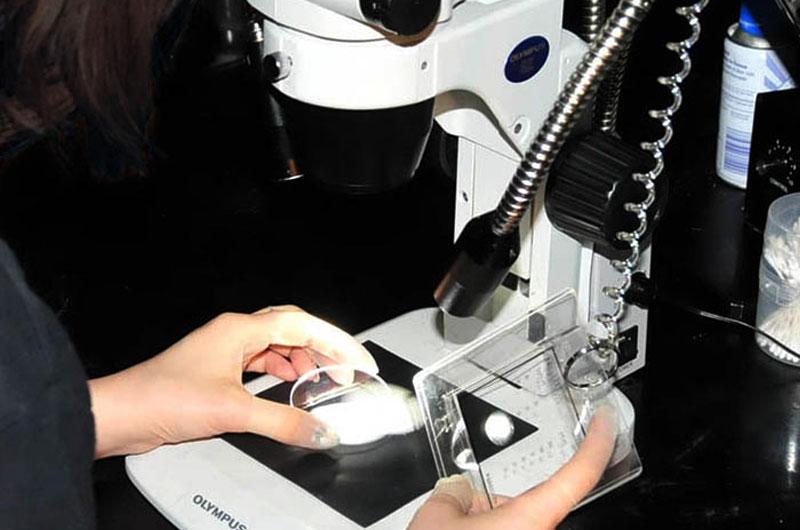 顕微鏡での検査