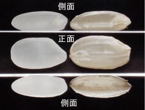 白米、玄米