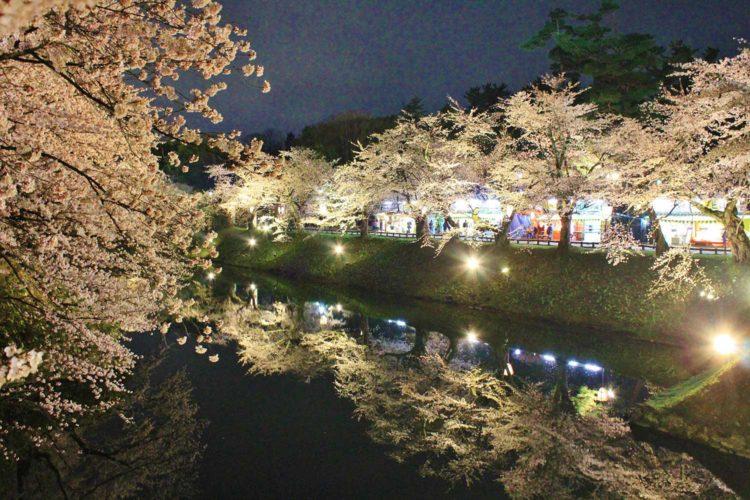 夜桜 杉の大橋